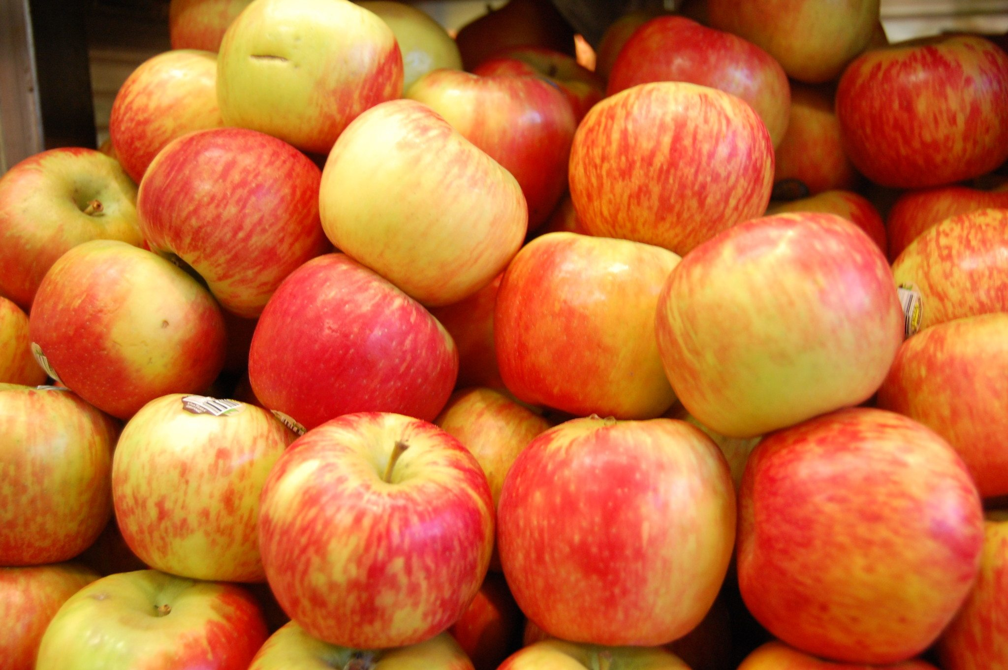 Your Best Fundraiser yet: Fall Fruit!