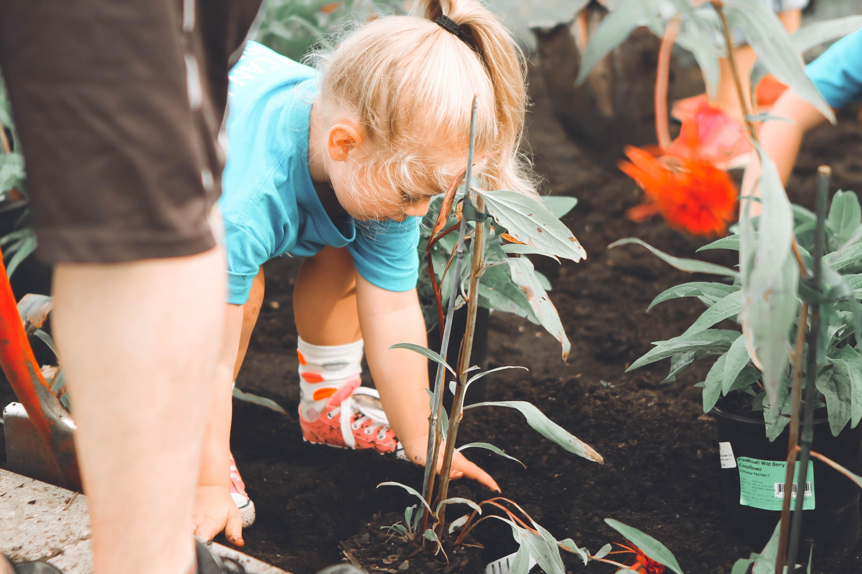 Creating a Home Garden